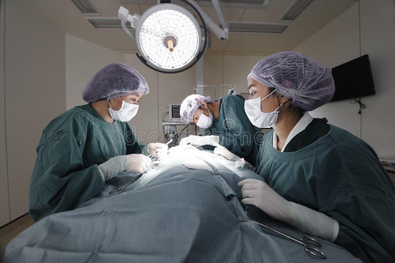 Grupo de cirurgia veterinária na sala de operação foto de stock