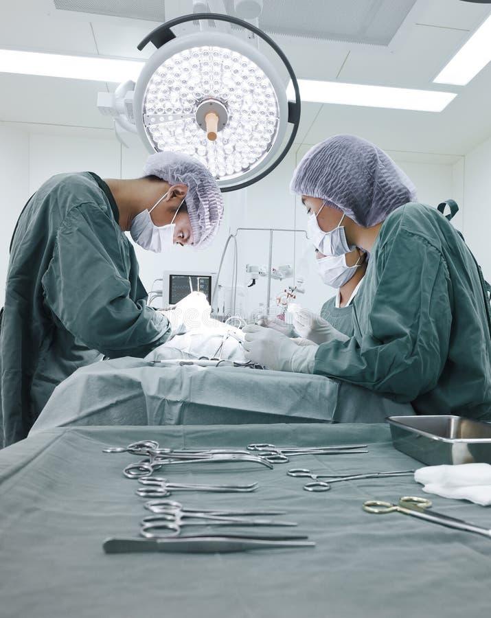 Grupo de cirurgia veterinária na sala de operação imagens de stock