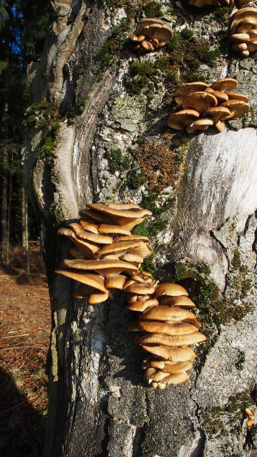 Grupo de claro - esponjas marrons da árvore imagens de stock