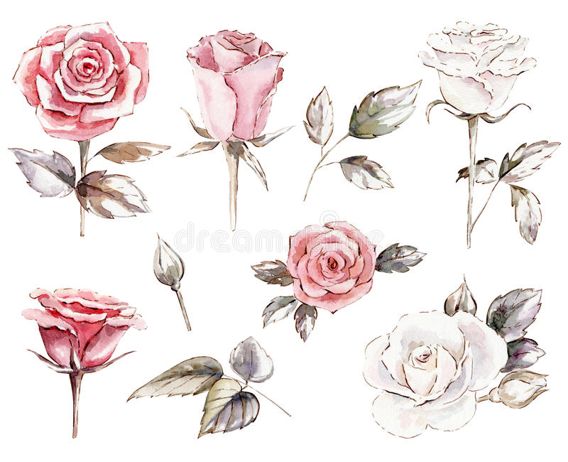 grupo de cliparts das rosas ilustração do vetor