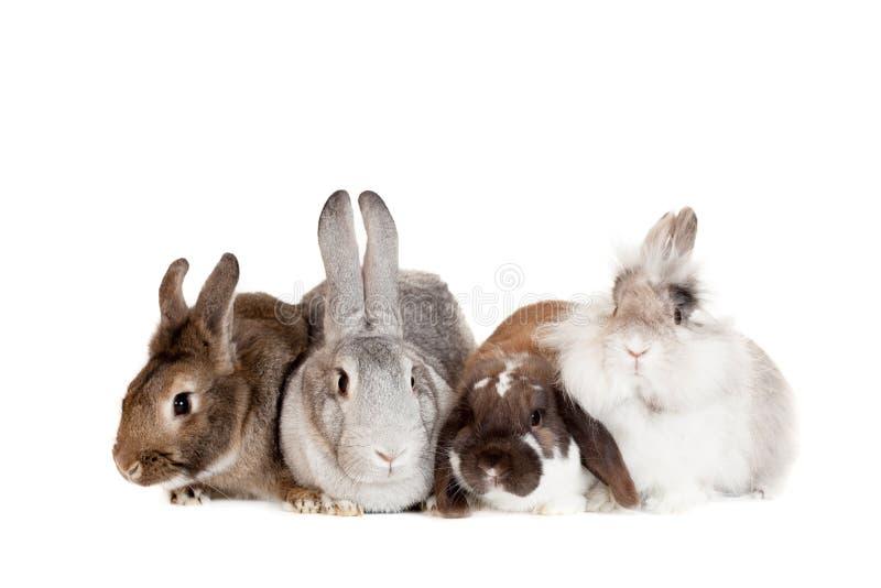 Grupo de coelhos diferentes das raças foto de stock
