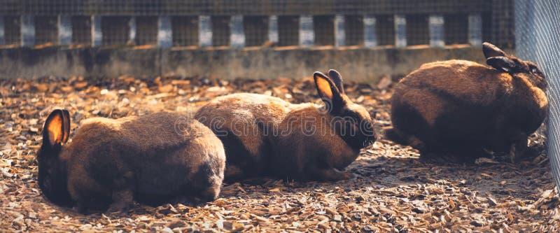 Grupo de coelhos marrons atrás de uma cerca imagem de stock royalty free