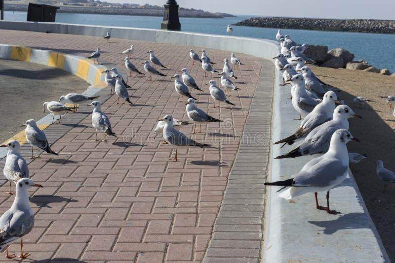 Grupo de colocación de los pájaros de la gaviota imagenes de archivo
