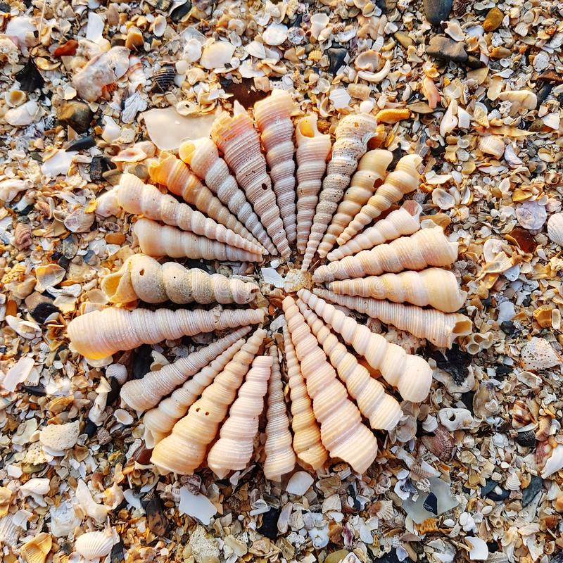 Grupo de conchas marinas en la playa fotografía de archivo libre de regalías