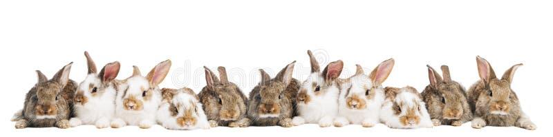 Grupo de conejos en una fila foto de archivo libre de regalías