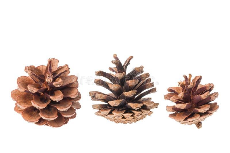 Grupo de conos de los árboles coníferos aislados en el fondo blanco foto de archivo libre de regalías