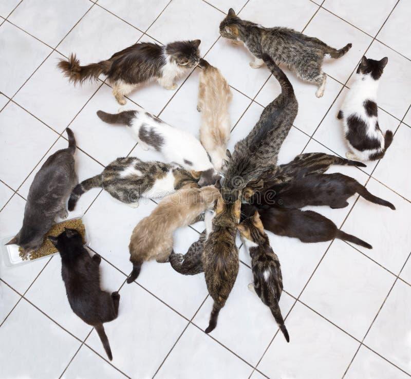 Grupo de consumición de los gatos imágenes de archivo libres de regalías