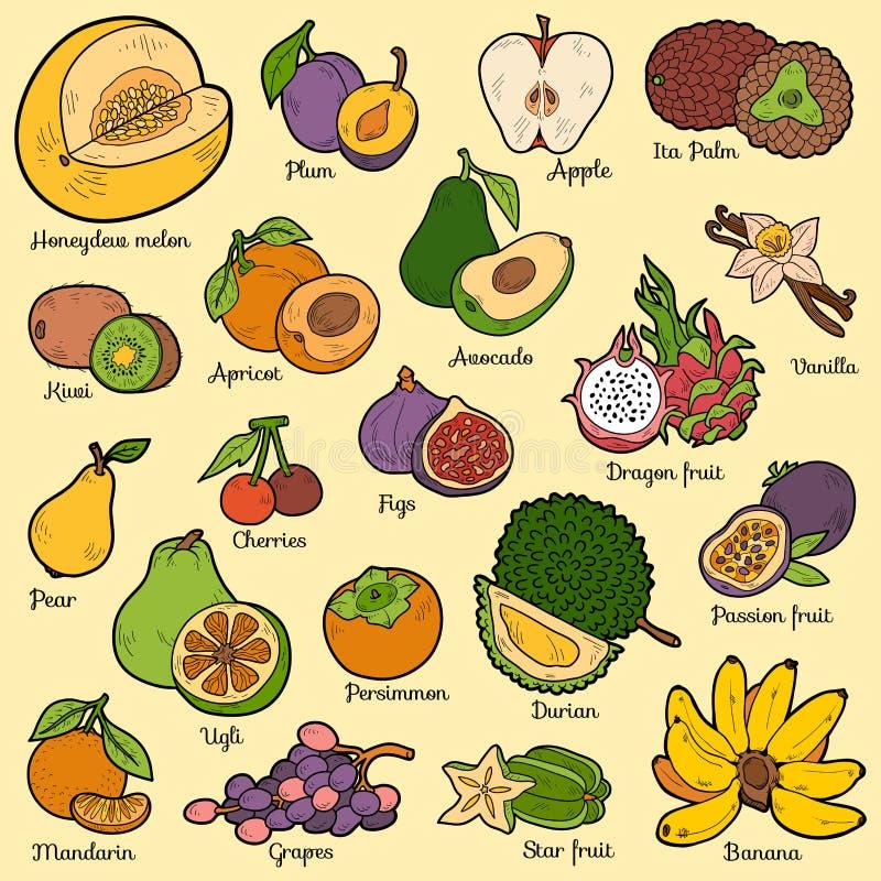 Grupo de cor com frutos tropicais, etiquetas dos desenhos animados do vetor ilustração do vetor