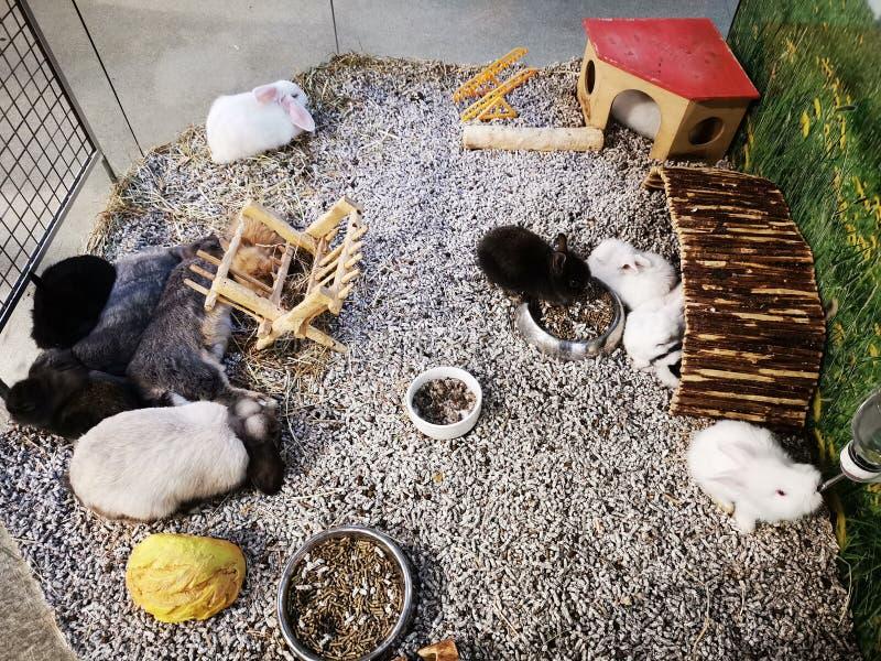 Grupo de cores da variedade dos coelhos empilhado fotografia de stock