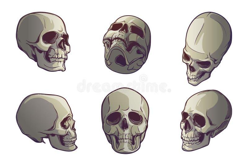 Grupo de 5 crânios humanos em vários ângulos de visão Desenho linear pintado em 3 máscaras, isoladas no fundo branco ilustração do vetor