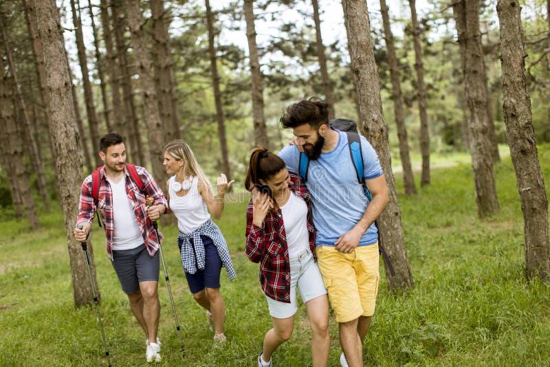 Grupo de cuatro amigos que caminan junto a través de un bosque fotos de archivo libres de regalías