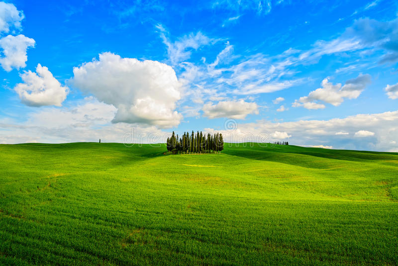 Grupo de Cypress e paisagem rural do campo em Orcia, San Quirico, T fotografia de stock