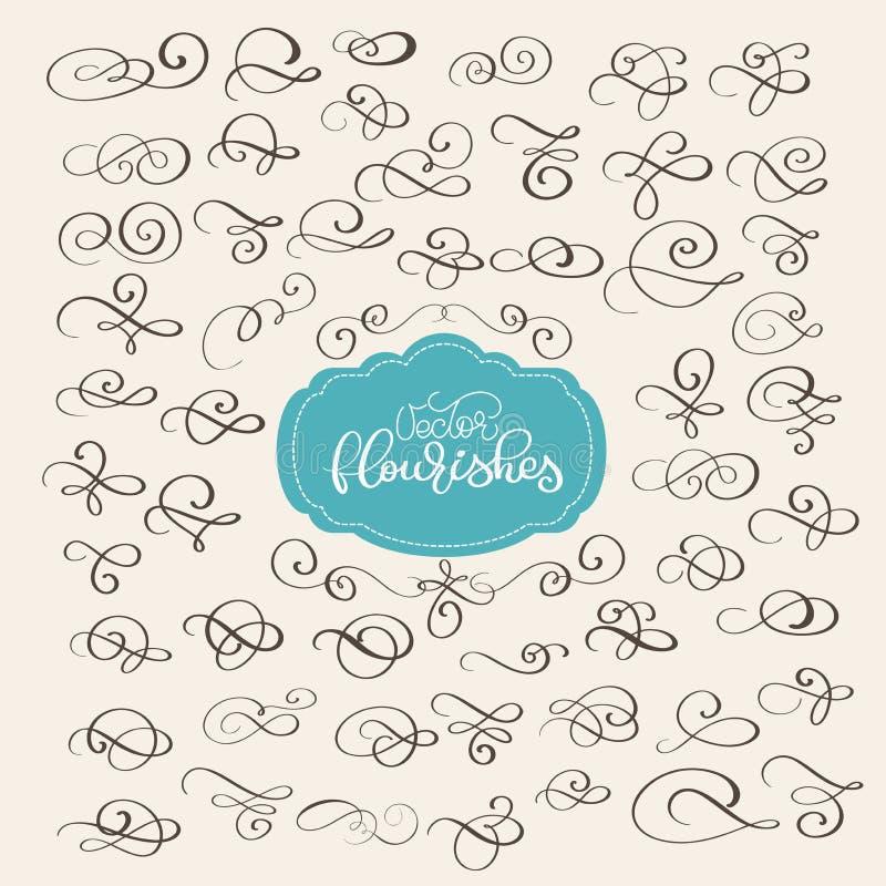 Grupo de decoração ornamentado do redemoinho do Flourish para o estilo aguçado da caligrafia da tinta da pena Flourishes da pena  ilustração royalty free