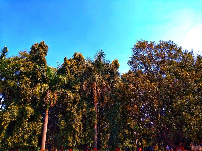 Grupo de diversos árboles de la diferencia grande en un jardín imagen de archivo libre de regalías