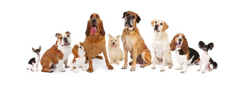 Grupo de diversos perros del tamaño imagen de archivo libre de regalías
