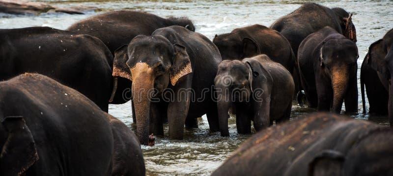 Grupo de elefantes imagem de stock royalty free