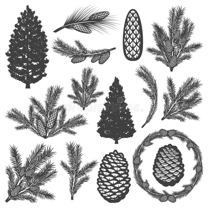 Grupo de elementos da árvore conífera do vintage ilustração do vetor