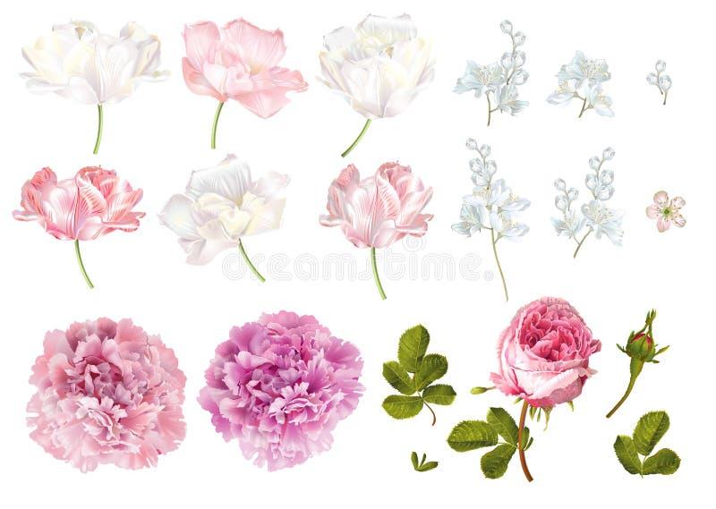 Grupo de elementos da flor ilustração royalty free