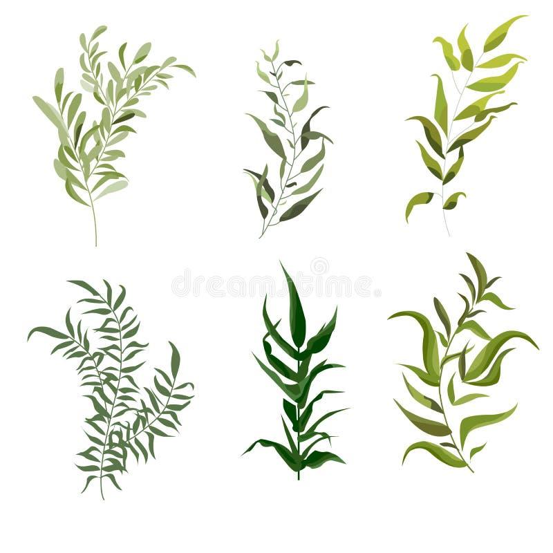 Grupo de elementos do vetor da samambaia da floresta, ervas naturais das folhas da folha verde tropical da arte das hortaliças do ilustração do vetor