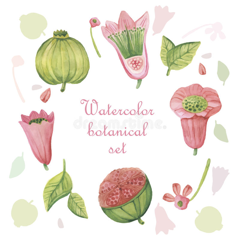 Grupo de elementos florais da aquarela no estilo do vintage ilustração stock
