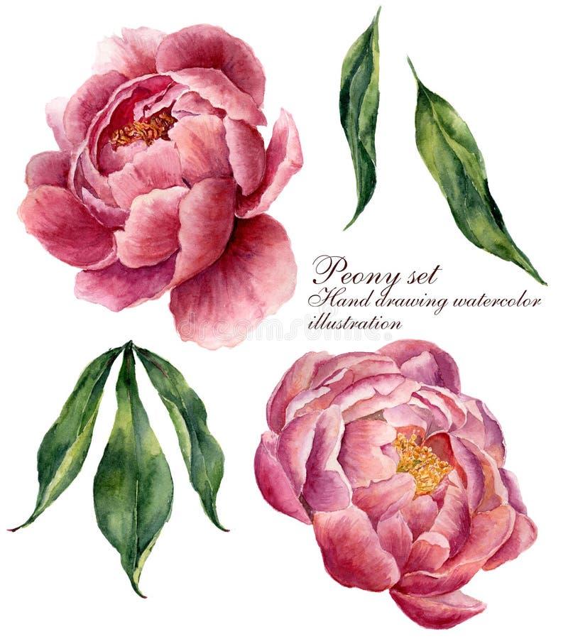 Grupo de elementos floral da aquarela Folhas do vintage e flores da peônia isoladas no fundo branco Botânico tirado mão ilustração royalty free
