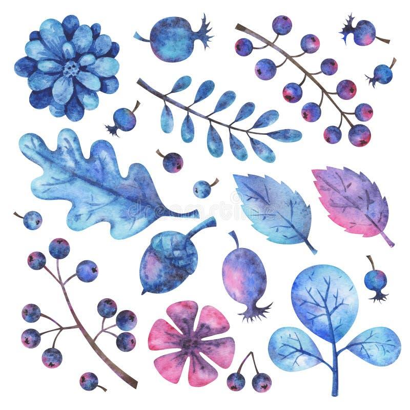 Grupo de elementos floral da aquarela pintado à mão ilustração do vetor