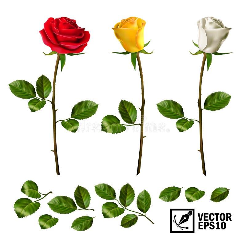 Grupo de elementos realístico do vetor de folhas das rosas, de botão e de uma flor aberta ilustração royalty free