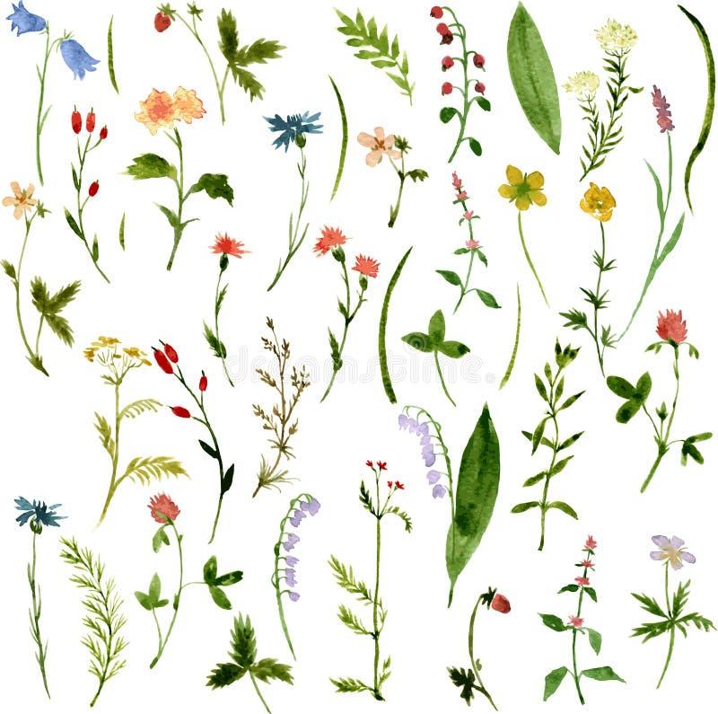 Grupo de ervas e de flores do desenho da aquarela ilustração do vetor