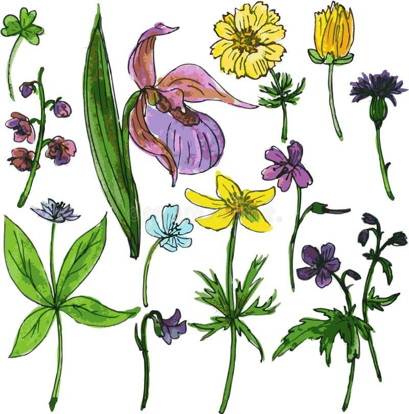 Grupo de ervas e de flores do desenho da aquarela ilustração royalty free