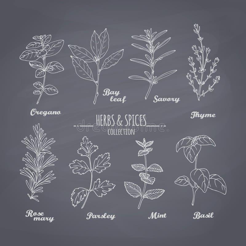 Grupo de ervas picantes tiradas mão no fundo do quadro ilustração stock