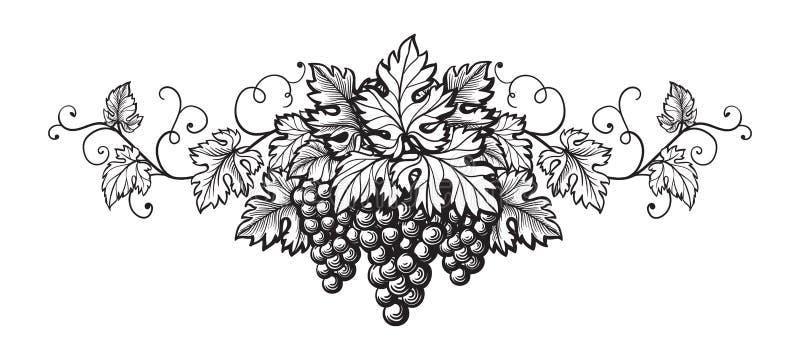 Grupo de esboço do monochrome das uvas ilustração do vetor