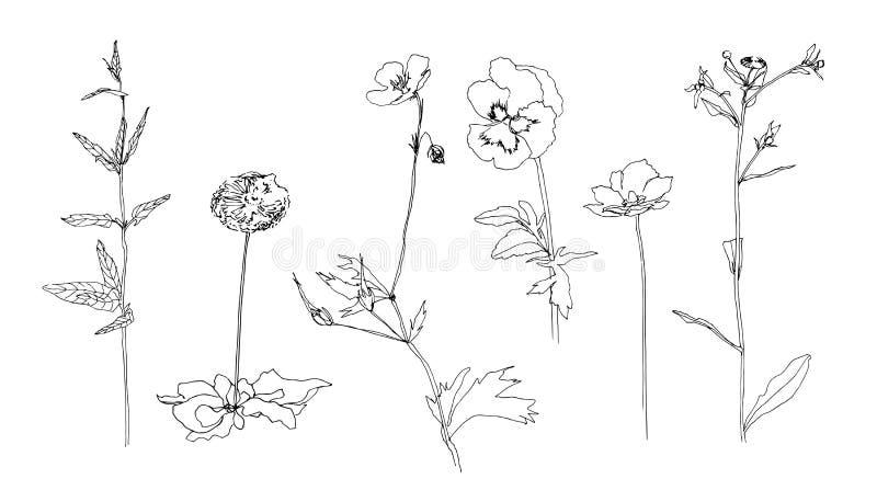 Grupo de esboço tirado mão das flores com folhas Esboce ou rabiscar a ilustração do vetor pintada pelo forro Imagem preta na part ilustração stock