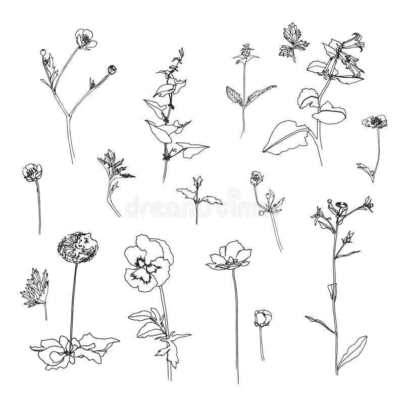 Grupo de esboço tirado mão das flores com folhas Imagem do vetor do estilo do esboço ou da garatuja ilustração stock