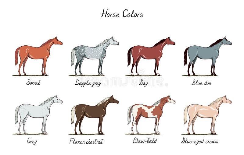 Grupo de escala de cores do cavalo Cores equinos do revestimento com texto Esquema equestre ilustração stock