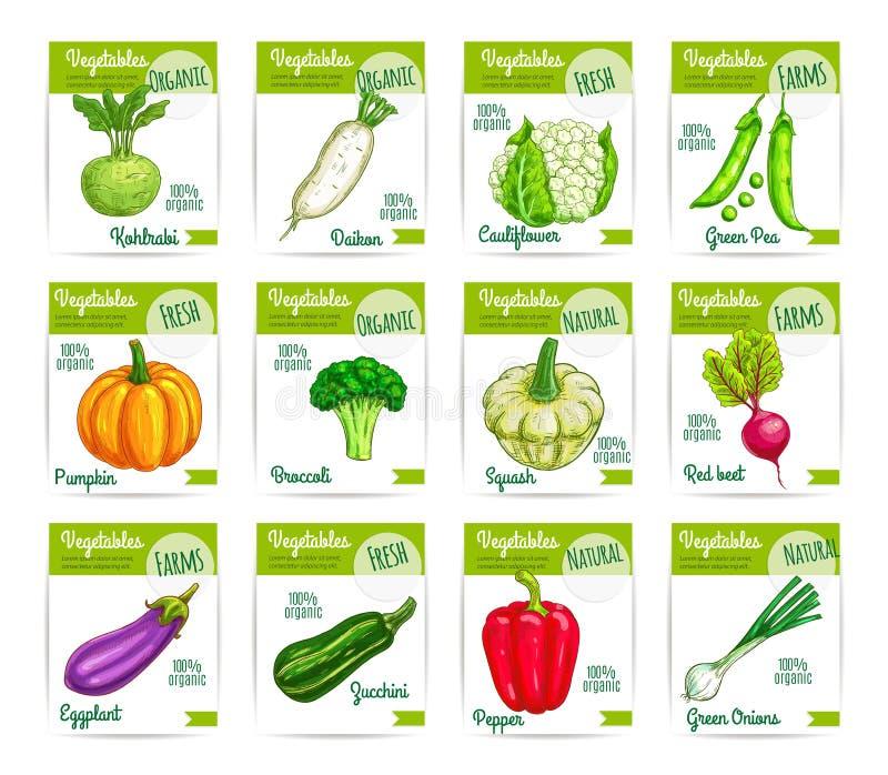 Grupo de etiquetas dos cartões de preço do vetor dos vegetarianos dos vegetais ilustração do vetor