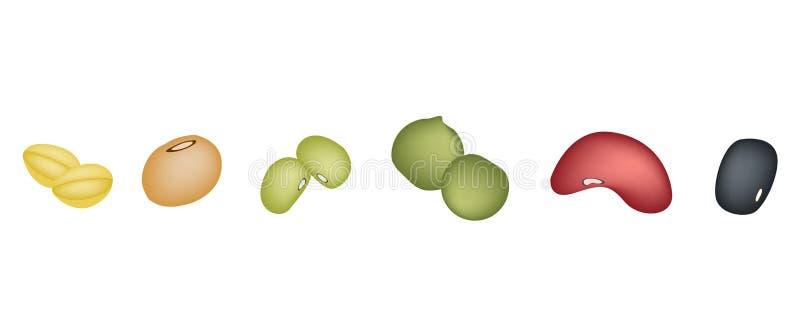 Grupo de feijões diferentes em seguido ilustração stock
