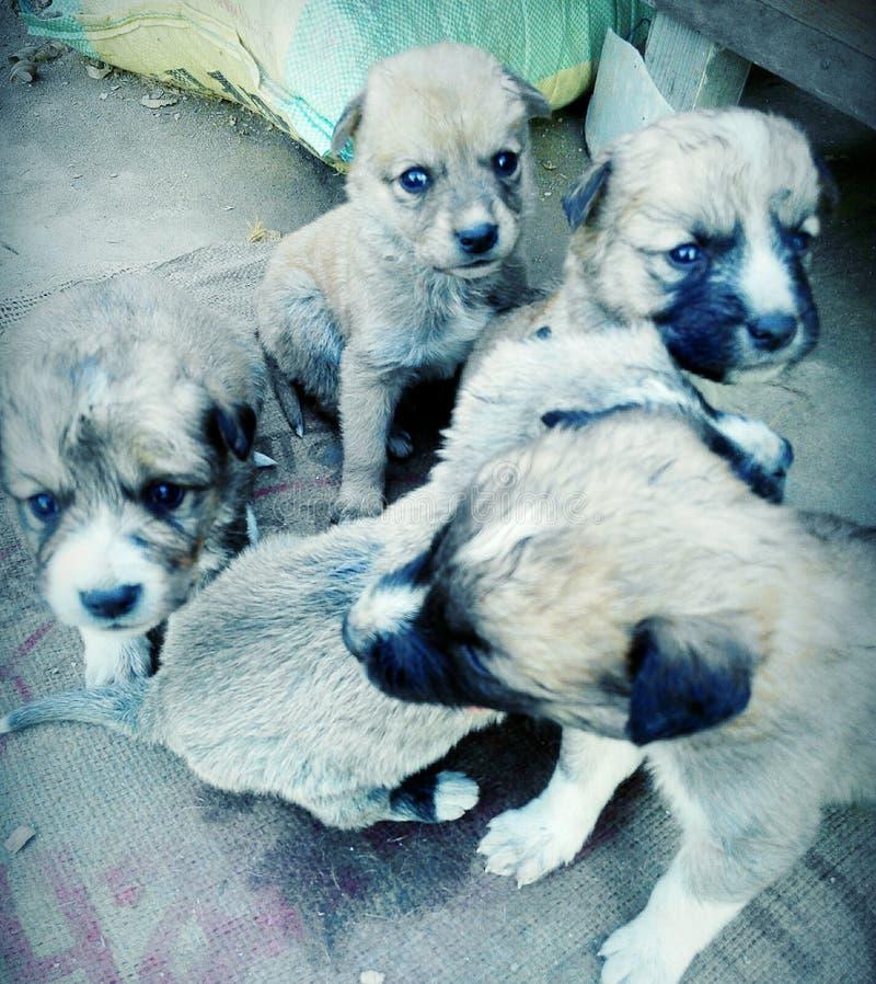 Grupo de filhotes de cachorro imagens de stock