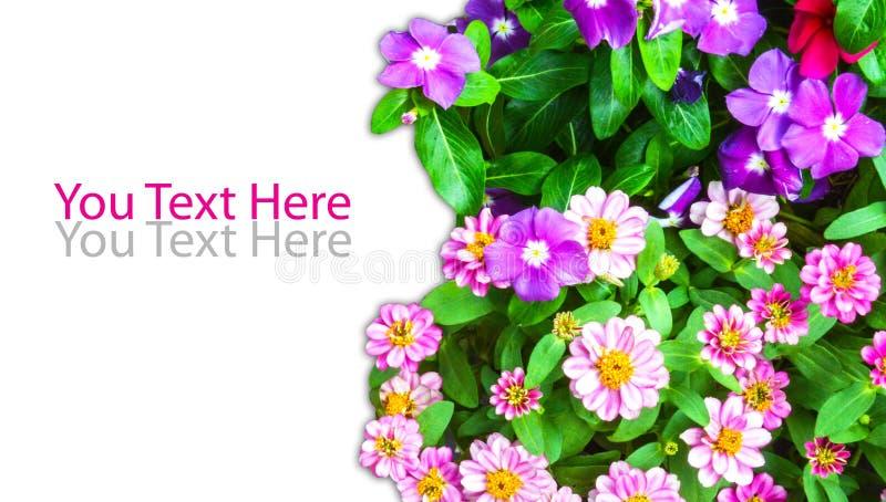 Grupo de flor com placa fotografia de stock royalty free