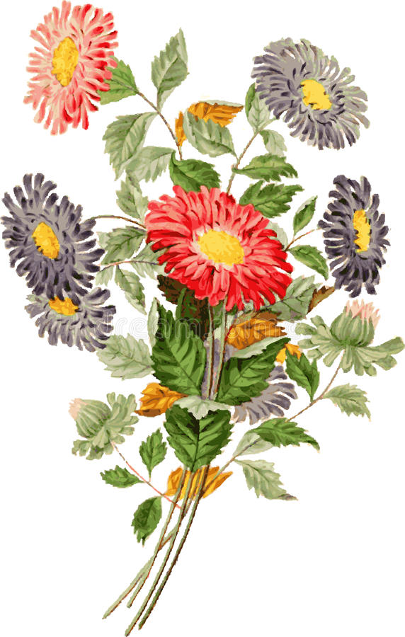 Grupo de flores. ilustração do vetor