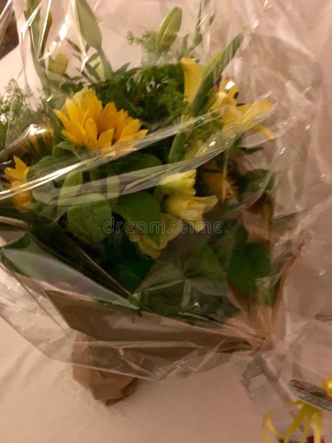 Grupo de flores amarelas: Cor da inveja fotos de stock royalty free