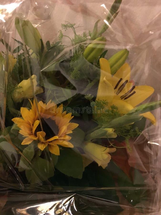 Grupo de flores amarelas: Cor da inveja imagem de stock