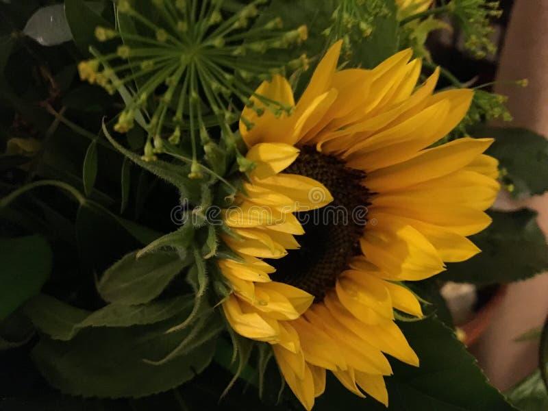Grupo de flores amarelas fotos de stock