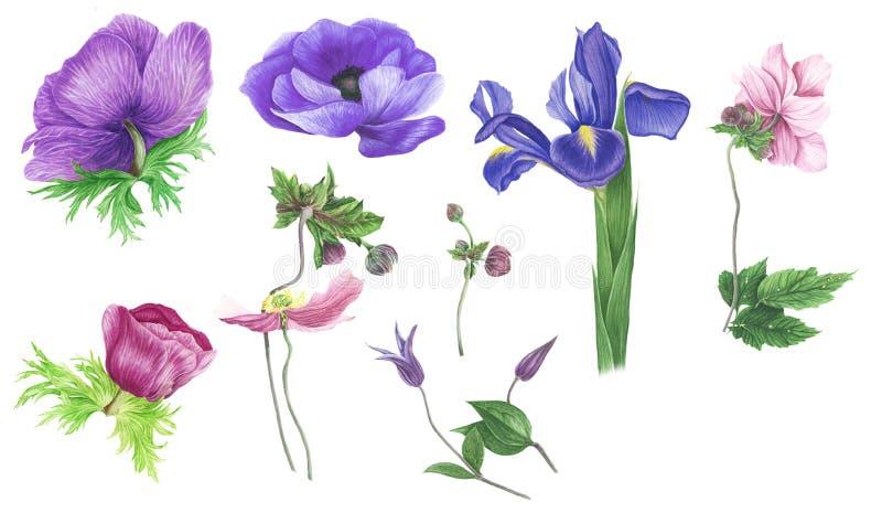 Grupo de flores: anêmonas, clematite e íris azuis e cor-de-rosa ilustração royalty free
