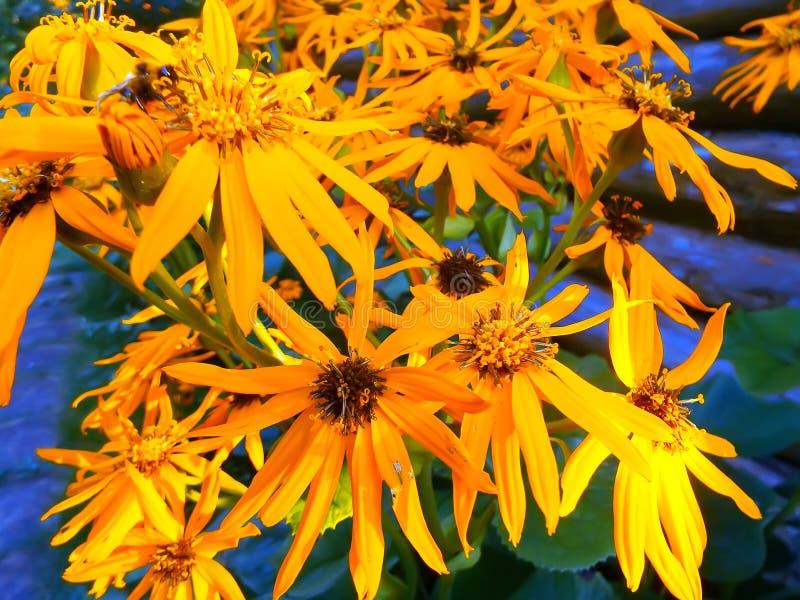 Grupo de flores anaranjadas foto de archivo