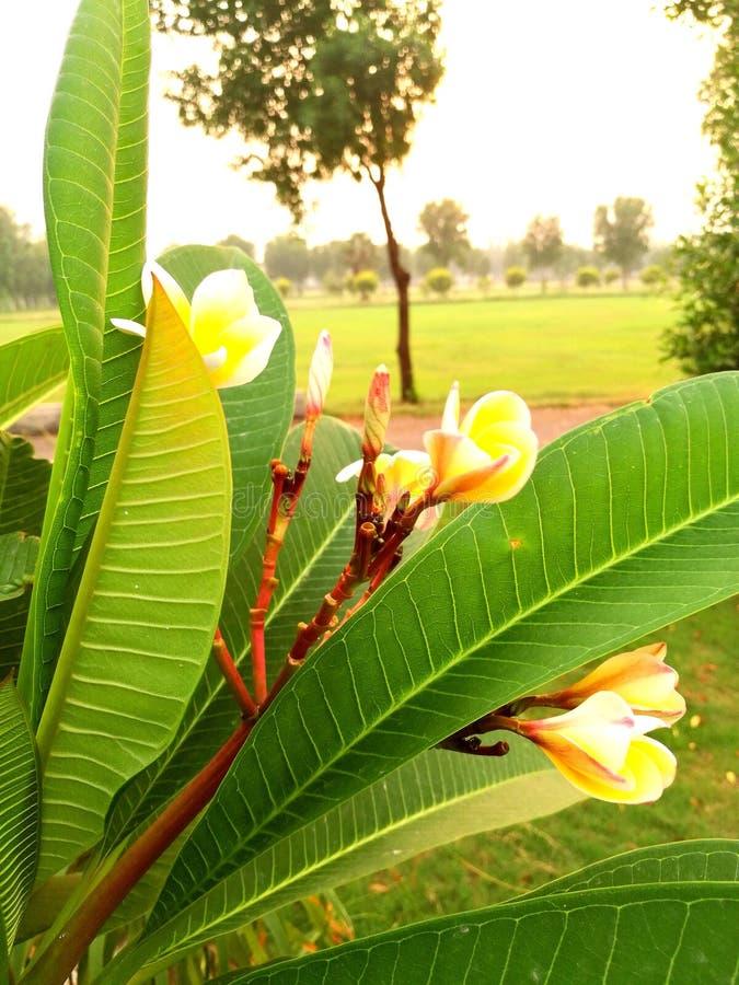 Grupo de flores blancas y amarillas imagen de archivo libre de regalías