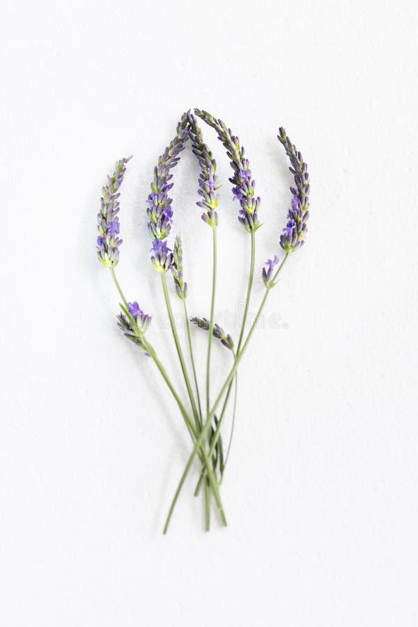 Grupo de flores da alfazema foto de stock