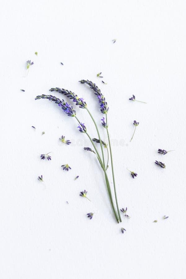 Grupo de flores da alfazema imagens de stock