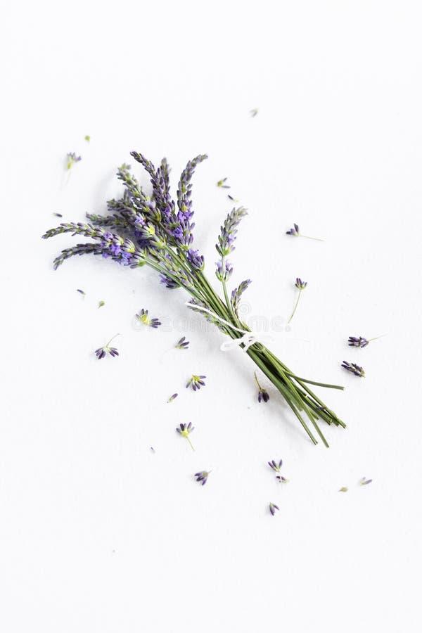 Grupo de flores da alfazema fotografia de stock