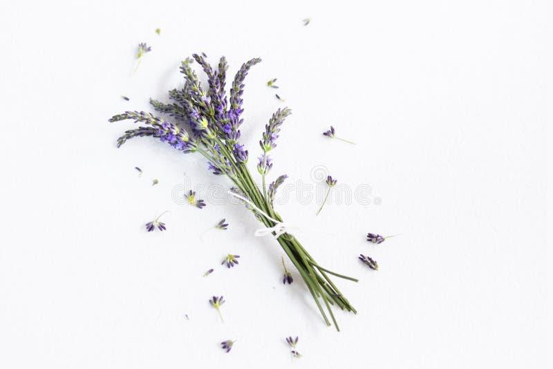 Grupo de flores da alfazema imagem de stock royalty free
