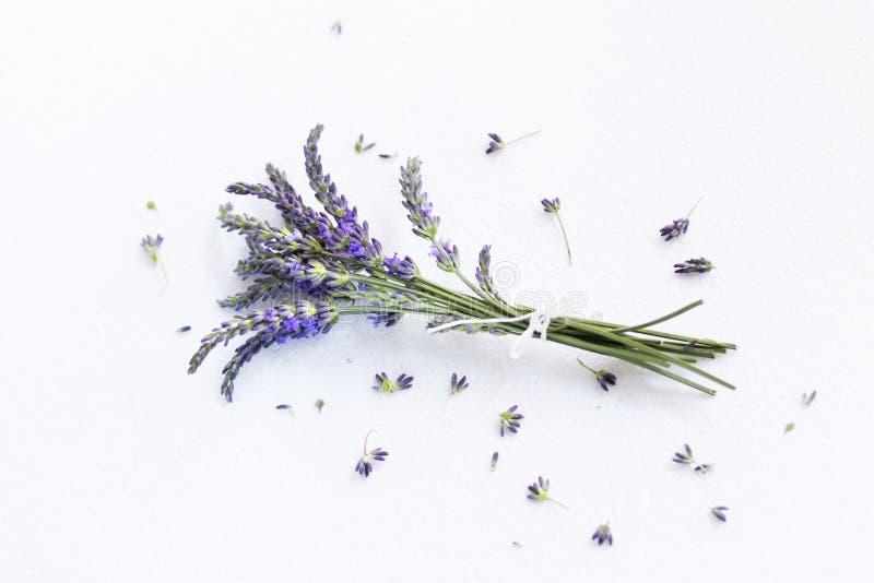 Grupo de flores da alfazema imagens de stock royalty free